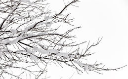 Winter trees on snow Royalty Free Stock Photography