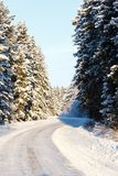 Winter and trees in snow Royalty Free Stock Photos