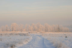 Winter trees in the snow. At sunrise Stock Image