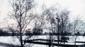 Winter.Trees. Winter trees snow beatiful Royalty Free Stock Photography