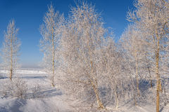 Winter trees snow frost hoarfrost Stock Photography