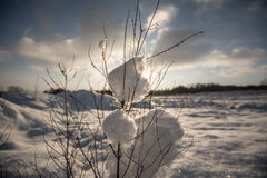 Winter, trees in snow Royalty Free Stock Photography