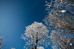 Winter trees in snow, frozen nature Royalty Free Stock Images