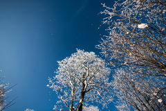 Winter trees in snow, frozen nature Stock Photo