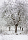 Winter trees in snow Stock Photography