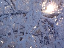 Winter. Trees in the snow,its -25* frost,such a snowy winter every year,a clear sunny day Royalty Free Stock Photos