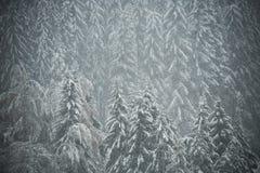 Winter trees on snow, mountain background Stock Photo