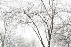 Winter trees on snow at park Royalty Free Stock Images