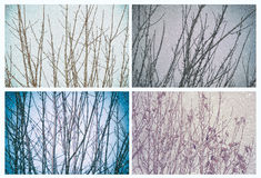 Winter trees and snow set. Collage of four winter images with snow and bare branches Royalty Free Stock Image