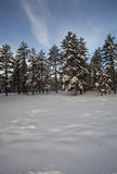 Winter trees on snow with sky Royalty Free Stock Photo