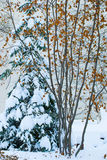 Winter trees in the snow Royalty Free Stock Photos