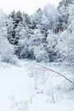 Winter trees on snow Stock Image