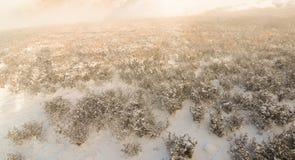 Winter trees on snow white background Royalty Free Stock Photos