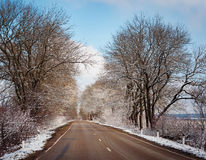 Winter trees on snow and white road Stock Images