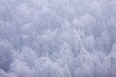 Winter trees. Snow winter wood Royalty Free Stock Images