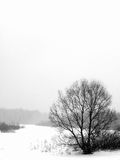Winter. Trees. A snowfall. Royalty Free Stock Photos