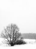 Winter. Trees. A snowfall. Royalty Free Stock Image