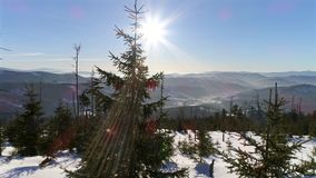 Between Winter Trees Snowy Aerial 4k. 4k aerial of a winter landscape in Polish mountains stock footage