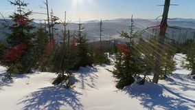 Winter Trees Snowy Hill Aerial 4k stock footage