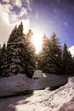 Winter trees with sun Royalty Free Stock Image