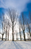 Winter trees on a sunny day. Winter Trees silhouette on sunny day with snow on ground, Rutland Water Stock Images