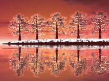Winter trees by sunset Royalty Free Stock Image