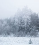 Winter trees in thick fog Royalty Free Stock Photos