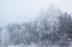 Winter trees in thick fog Royalty Free Stock Photography