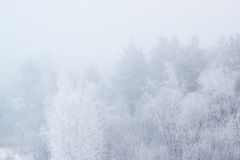 Winter trees in thick fog Stock Images