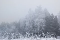 Winter trees in thick fog Stock Photo