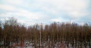 Winter trees timelapse. Beautiful Winter trees timelapse stock video footage