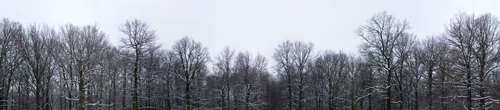 Winter trees top Stock Photography