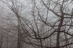 Winter trees. Royalty Free Stock Images