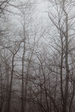 Winter trees. Royalty Free Stock Photography