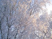 Winter trees under snow on a blue sky background Royalty Free Stock Images