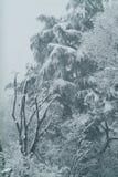 Winter, trees under snow Stock Photo