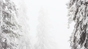 Winter trees under snow stock footage