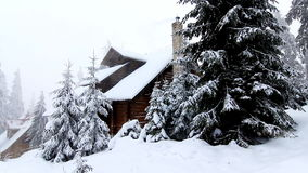 Winter trees under snow. Winter in mountains. Ukraine Carpathians Dragobrat stock video footage