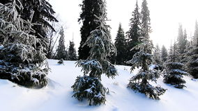 Winter trees under snow stock video footage