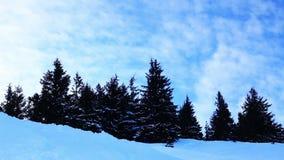 Winter trees under snow. Winter in mountains. Ukraine Carpathians Dragobrat stock footage