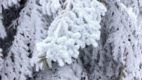 Winter trees under snow. Winter in mountains. Ukraine Carpathians Dragobrat stock video