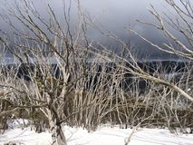Winter trees. In the Victorian Alps royalty free stock photos
