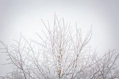 Winter trees with white rime Royalty Free Stock Photos
