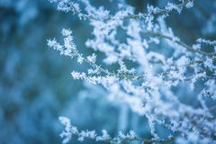 Winter trees with white rime Stock Image