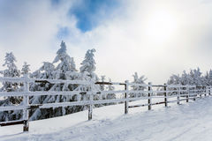 Winter trees and wooden fence covered in snow that borders a mou Royalty Free Stock Photography