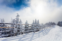 Winter trees and wooden fence covered in snow that borders a mountain road