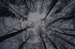 Winter treetops Royalty Free Stock Photography