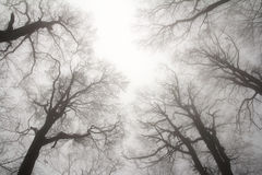 Winter treetops Stock Photo
