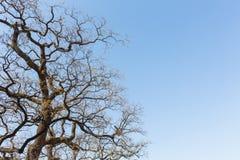 Winter treetops Stock Image