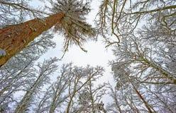 Winter on treetops Stock Photography
